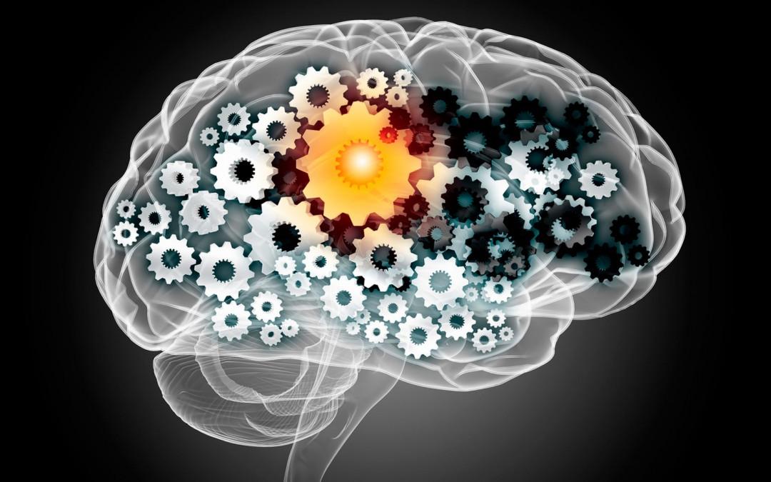 Neuropédagogie