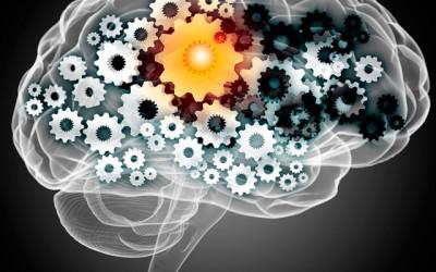 La motivation durable vue par les neurosciences